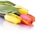 Ramalhete das tulipas amarelas e vermelhas Imagens de Stock Royalty Free