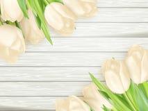 Ramalhete das tulipas brancas Eps 10 Fotografia de Stock Royalty Free