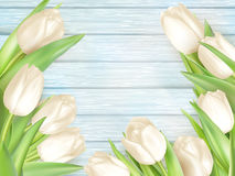 Ramalhete das tulipas brancas Eps 10 Imagem de Stock Royalty Free