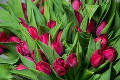 Ramalhete das tulipas cor-de-rosa macro Fotografia de Stock