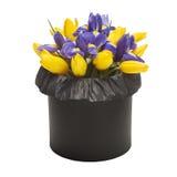 Ramalhete das tulipas e das íris na caixa negra isolada no fundo branco Fotos de Stock Royalty Free