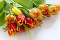 Ramalhete das tulipas no fundo branco imagens de stock