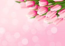 Ramalhete das tulipas no fundo cor-de-rosa com espaço para a mensagem val Imagens de Stock