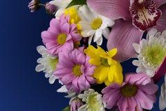 Ramalhete de ásteres cor-de-rosa, brancos e amarelos das flores Fotos de Stock Royalty Free