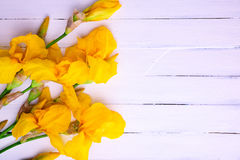 Ramalhete de íris amarelas em um fundo de madeira branco Fotos de Stock