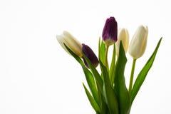 Ramalhete de cinco tulipas frescas no fundo branco Imagem de Stock