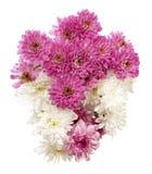 Ramalhete de crisântemos cor-de-rosa e brancos Foto de Stock Royalty Free