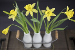 Ramalhete de daffodils amarelos Fotos de Stock Royalty Free