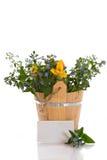 Ramalhete de flores adiantadas da mola Fotografia de Stock