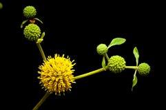 Ramalhete de flores amarelas Fotografia de Stock
