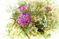 Ramalhete de flores anuais imagem de stock royalty free