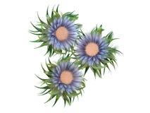 Ramalhete de flores coloridas Fotos de Stock