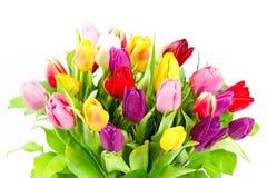Ramalhete de flores coloridas dos tulips Foto de Stock