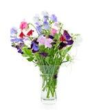 Ramalhete de flores da ervilha doce no vaso Fotografia de Stock Royalty Free