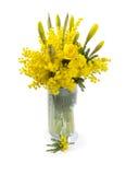 Ramalhete de flores da mimosa e do narciso Imagem de Stock