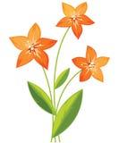 Ramalhete de flores do lírio Fotos de Stock