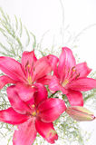 Ramalhete de flores do lírio Fotografia de Stock Royalty Free