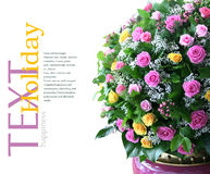 Ramalhete de flores frescas Fotografia de Stock Royalty Free