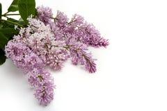Ramalhete de flores lilás Imagens de Stock