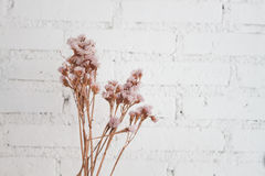 Ramalhete de flores secadas com fundo branco Imagem de Stock