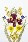 Ramalhete de flores secadas e pressionadas Imagem de Stock Royalty Free