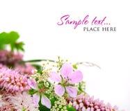 Ramalhete de flores selvagens em um fundo branco Fotografia de Stock
