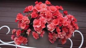 Ramalhete de flores vermelhas vídeos de arquivo