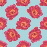 Ramalhete de flores vermelhas da peônia Teste padrão floral do verão sem emenda Fotografia de Stock Royalty Free