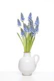 Ramalhete de jacintos de uva pequenos Imagens de Stock