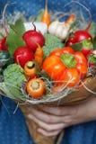 Ramalhete de legumes frescos na mão do ` s das mulheres Imagens de Stock Royalty Free