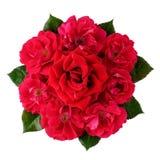 Ramalhete de muitas rosas vermelhas isoladas no branco Imagens de Stock