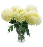 Ramalhete de mums amarelos Imagem de Stock Royalty Free