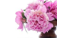 Ramalhete de peônias de florescência no fundo branco Fotografia de Stock Royalty Free