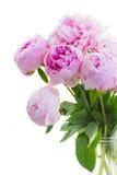 Ramalhete de peonies cor-de-rosa Foto de Stock