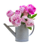 Ramalhete de peonies cor-de-rosa Imagens de Stock
