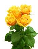 Ramalhete de Rosa Foto de Stock