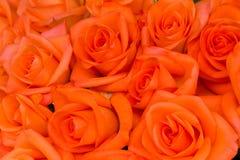 Ramalhete de rosas alaranjadas foto de stock royalty free