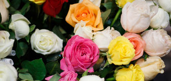 Ramalhete de rosas coloridas bonitas Fotos de Stock Royalty Free