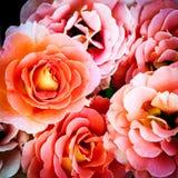 Ramalhete de rosas cor-de-rosa Imagens de Stock