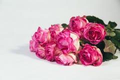 Ramalhete de rosas cor-de-rosa no fundo branco Fotos de Stock