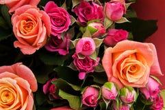 Ramalhete de rosas cor-de-rosa Foto de Stock Royalty Free