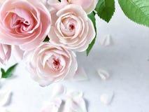 Ramalhete de rosas cor-de-rosa bonitas imagem de stock