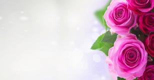Ramalhete de rosas cor-de-rosa frescas foto de stock