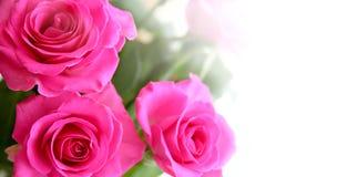 Ramalhete de rosas de rosa Fotografia de Stock Royalty Free