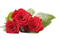 Ramalhete de rosas vermelhas Imagens de Stock Royalty Free
