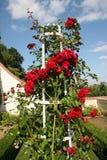 Ramalhete de rosas vermelhas bonitas Foto de Stock