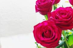 Ramalhete de rosas vermelhas frescas Imagens de Stock Royalty Free