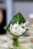 Ramalhete bonito de Snowdrops Fotografia de Stock Royalty Free