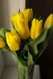 Ramalhete de tulipas amarelas Fotos de Stock Royalty Free