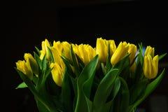 Ramalhete de tulipas amarelas no fundo escuro Foto de Stock Royalty Free
